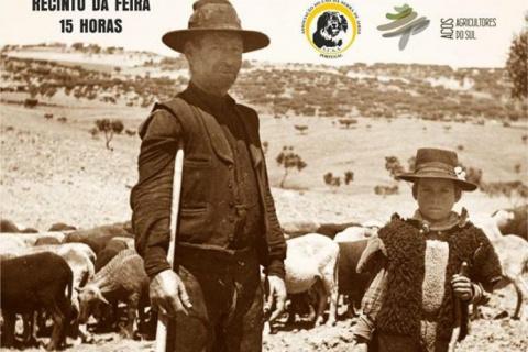Concurso Regional do Cão da Serra de Aires